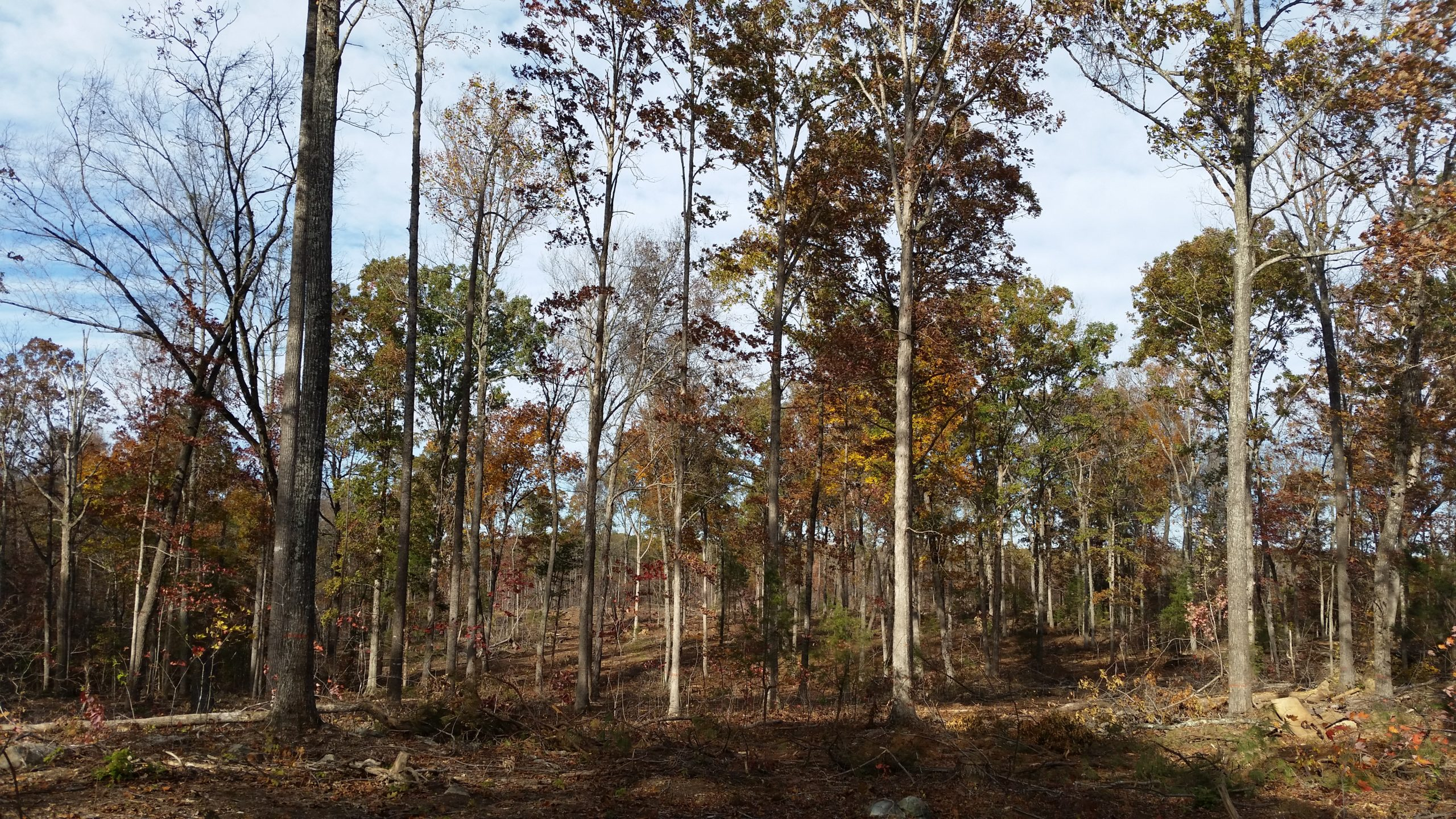 Forest Management Activities Begin on Cane Creek Mitigation Tract
