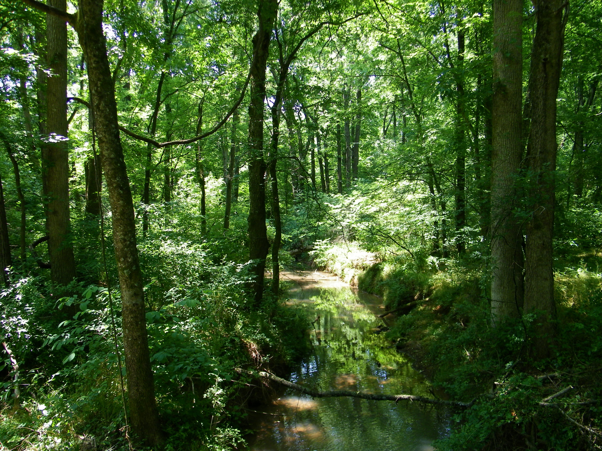 Protecting Water Quality by Protecting Forests